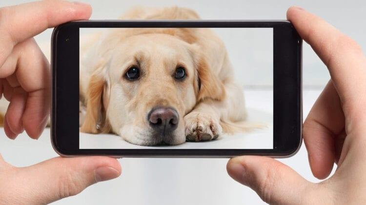 dog house camera