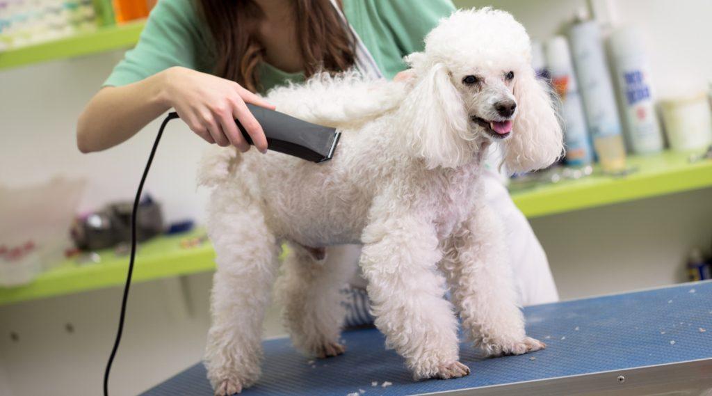 mobile pet prepping